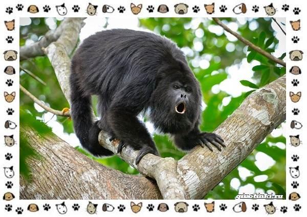 Виды-обезьян-так-ли-они-на-нас-похожи-34