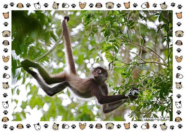 Виды-обезьян-так-ли-они-на-нас-похожи-35