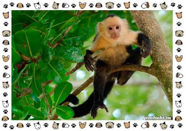Виды-обезьян-так-ли-они-на-нас-похожи-38