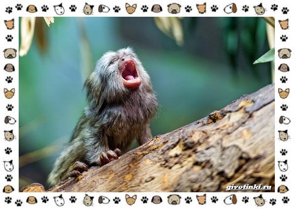 Виды-обезьян-так-ли-они-на-нас-похожи-42
