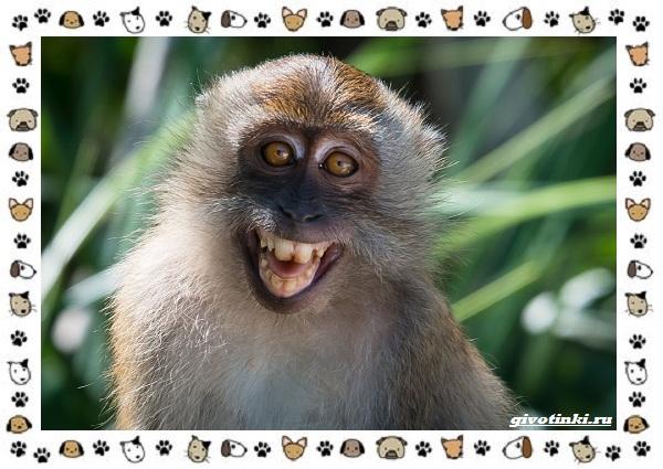 Виды-обезьян-так-ли-они-на-нас-похожи-43
