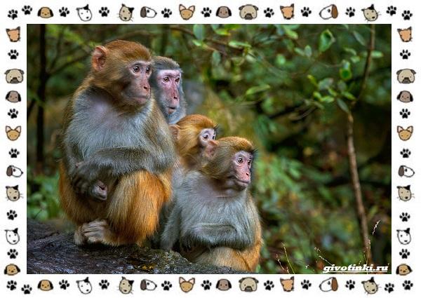 Виды-обезьян-так-ли-они-на-нас-похожи-44