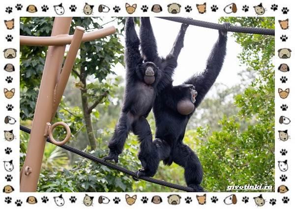 Виды-обезьян-так-ли-они-на-нас-похожи-5