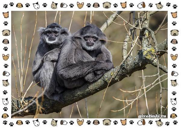 Виды-обезьян-так-ли-они-на-нас-похожи-6