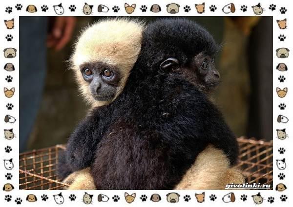 Виды-обезьян-так-ли-они-на-нас-похожи