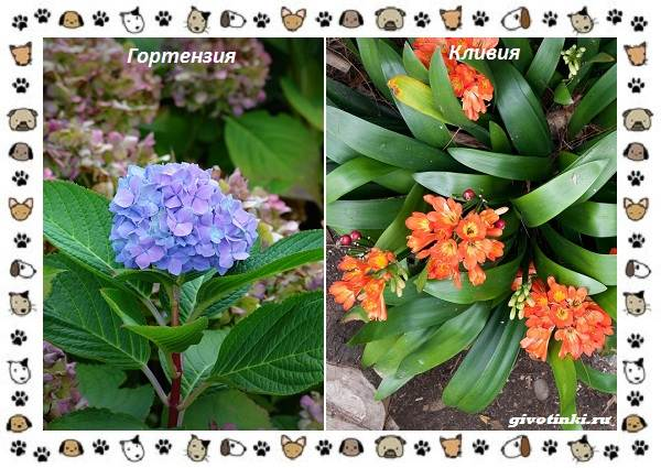 Ядовитые-растения-для-собак-10