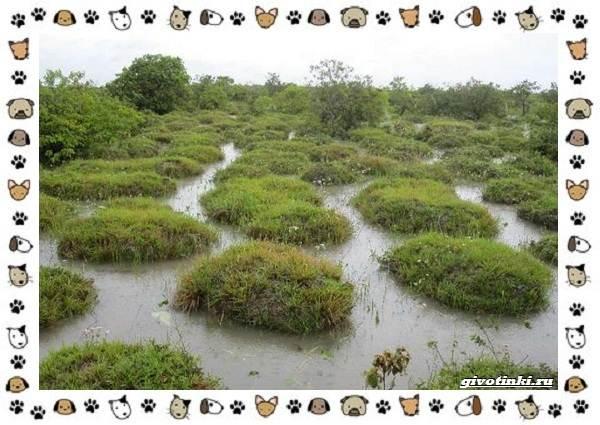 Виды-дождевых-червей-чем-они-для-нас-незаменимы-и-интересны-13