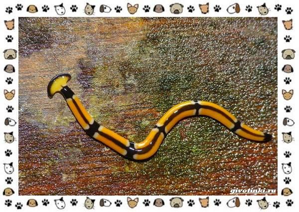 Виды-дождевых-червей-чем-они-для-нас-незаменимы-и-интересны-15