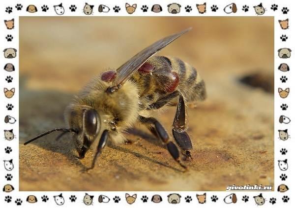Виды-клещей-безобидные-потребители-органики-хищники-вредители-и-паразиты-11
