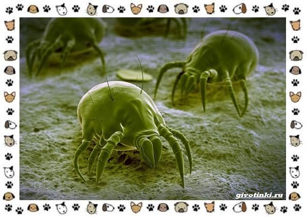 Виды-клещей-безобидные-потребители-органики-хищники-вредители-и-паразиты-16
