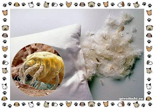 Виды-клещей-безобидные-потребители-органики-хищники-вредители-и-паразиты-17
