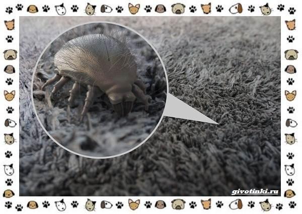Виды-клещей-безобидные-потребители-органики-хищники-вредители-и-паразиты-23