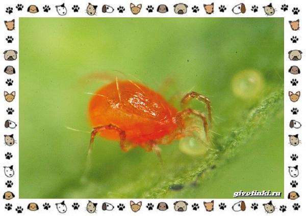 Виды-клещей-безобидные-потребители-органики-хищники-вредители-и-паразиты-25