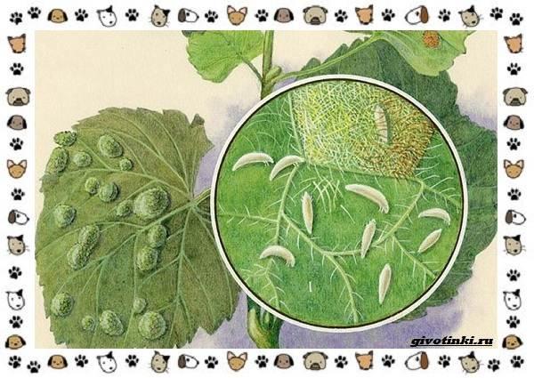 Виды-клещей-безобидные-потребители-органики-хищники-вредители-и-паразиты-6