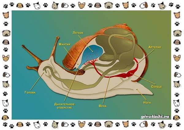 Виды-улиток-их-роль-в-экосистеме-и-жизни-человека-1