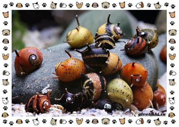Виды-улиток-их-роль-в-экосистеме-и-жизни-человека-11