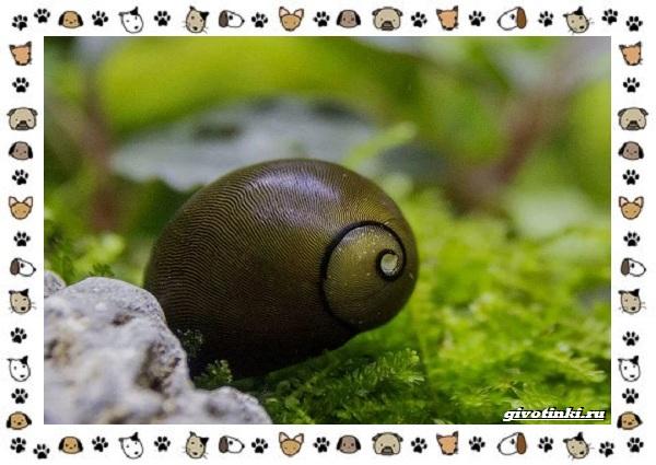 Виды-улиток-их-роль-в-экосистеме-и-жизни-человека-30