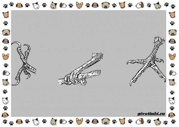 Виды-дятлов-настоящие-нетипичные-вымершие-4