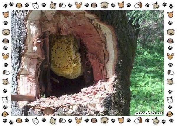 Виды-пчёл-и-их-неразгаданные-секреты-1