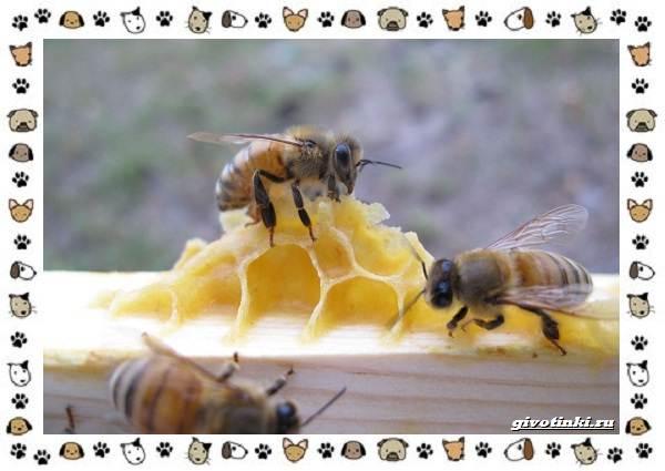 Виды-пчёл-и-их-неразгаданные-секреты-10