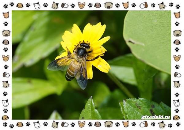 Виды-пчёл-и-их-неразгаданные-секреты-11