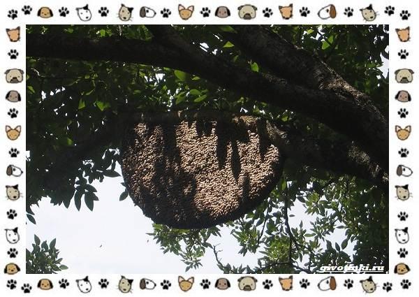 Виды-пчёл-и-их-неразгаданные-секреты-12
