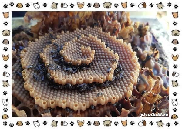 Виды-пчёл-и-их-неразгаданные-секреты-14