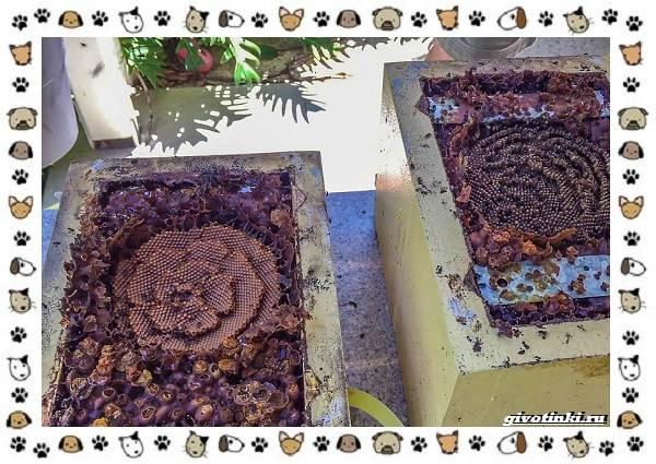 Виды-пчёл-и-их-неразгаданные-секреты-15