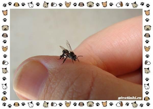 Виды-пчёл-и-их-неразгаданные-секреты-16