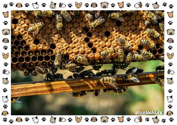 Виды-пчёл-и-их-неразгаданные-секреты-22