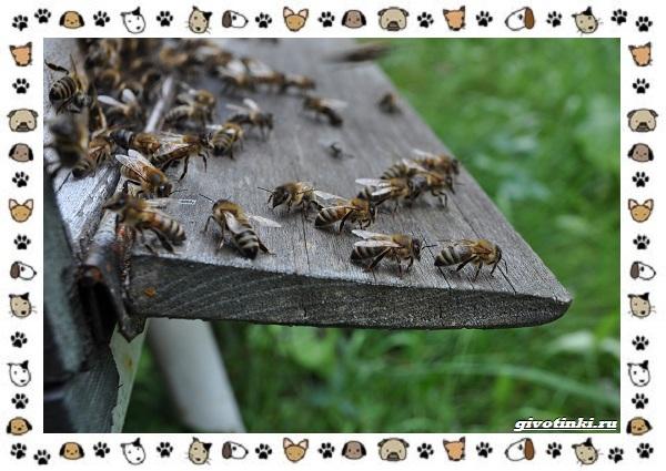 Виды-пчёл-и-их-неразгаданные-секреты-24
