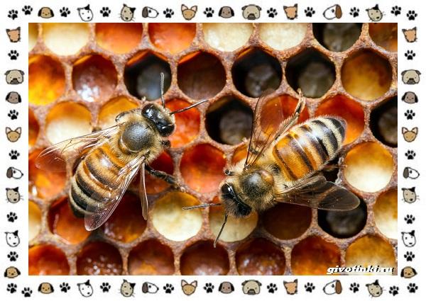Виды-пчёл-и-их-неразгаданные-секреты-25