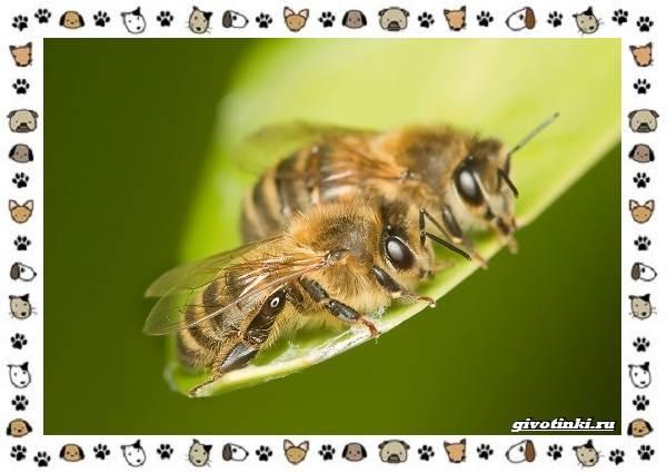 Виды-пчёл-и-их-неразгаданные-секреты-3