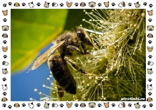 Виды-пчёл-и-их-неразгаданные-секреты-4