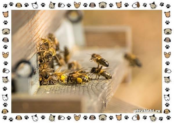 Виды-пчёл-и-их-неразгаданные-секреты-5