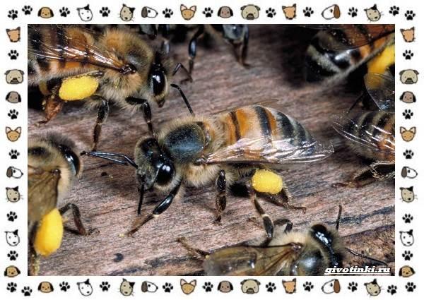 Виды-пчёл-и-их-неразгаданные-секреты-9