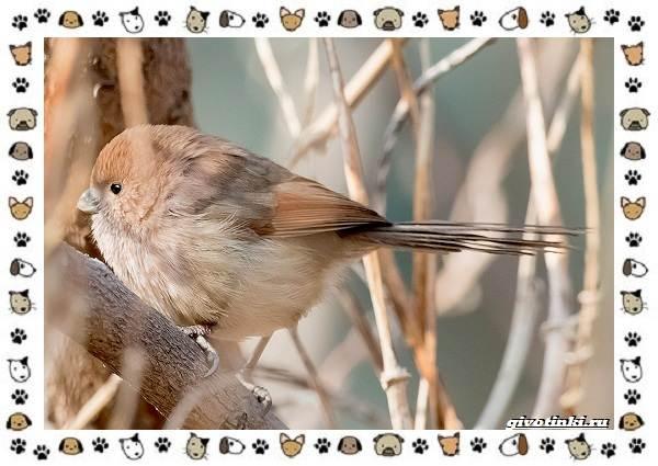 Виды-синиц-необычайно-полезных-маленьких-птичек-20