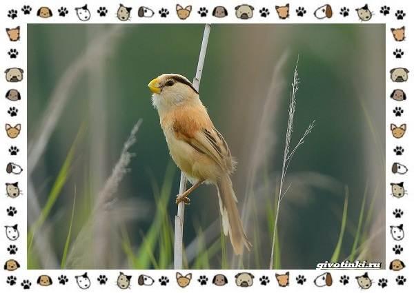 Виды-синиц-необычайно-полезных-маленьких-птичек-21