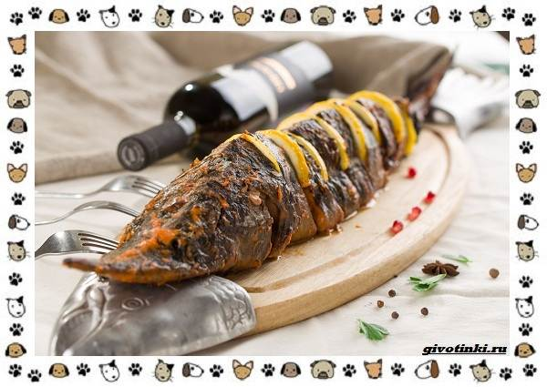 Рыба-бестер-описание-особенности-и-виды-11