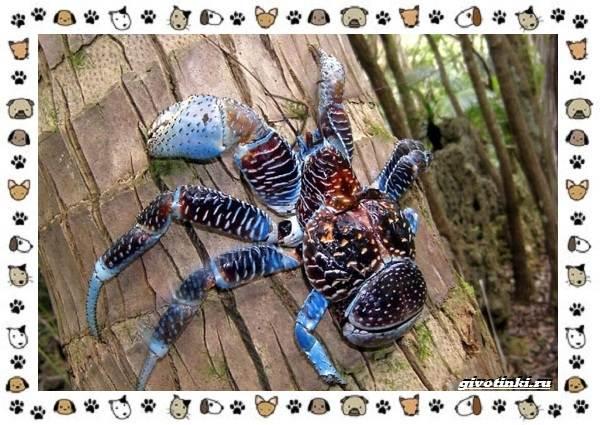Виды-крабов-каково-быть-десятиногим-31