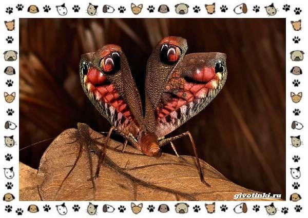 Виды-кузнечиков-насекомых-поющих-крыльями-и-слушающих-ногами-17