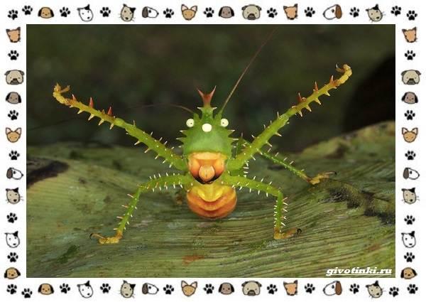 Виды-кузнечиков-насекомых-поющих-крыльями-и-слушающих-ногами-18