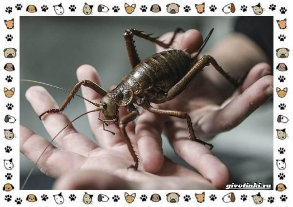 Виды-кузнечиков-насекомых-поющих-крыльями-и-слушающих-ногами-24