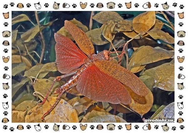 Виды-саранчи-описание-и-особенности-насекомого-14