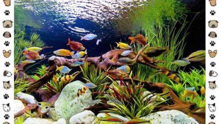 20 самых красивых видов пресноводных аквариумных рыб для домашнего содержания