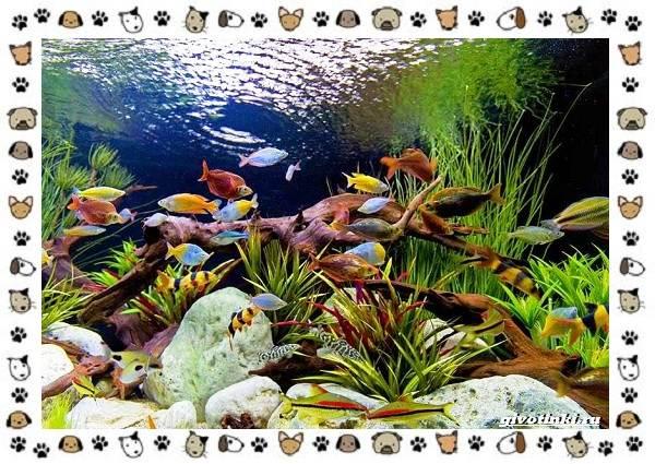 20-самых-красивых-видов-пресноводных-аквариумных-рыб-для-домашнего-содержания-1