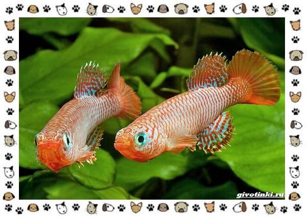 20-самых-красивых-видов-пресноводных-аквариумных-рыб-для-домашнего-содержания-15