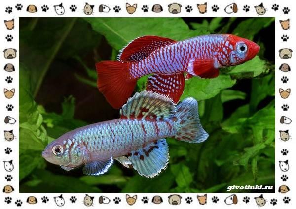 20-самых-красивых-видов-пресноводных-аквариумных-рыб-для-домашнего-содержания-16