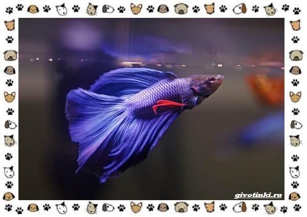 20-самых-красивых-видов-пресноводных-аквариумных-рыб-для-домашнего-содержания-18
