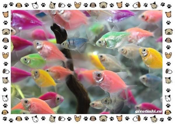 20-самых-красивых-видов-пресноводных-аквариумных-рыб-для-домашнего-содержания-2
